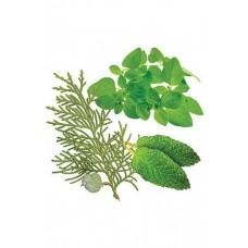 AromaTouch® Massage Blend / «АромаТач», смесь эфирных масел, 15 мл