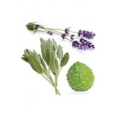 CLARYCALM (Monthly blend for women / Ясность и спокойствие), смесь эфирных масел для женщин, роллер, 10 мл